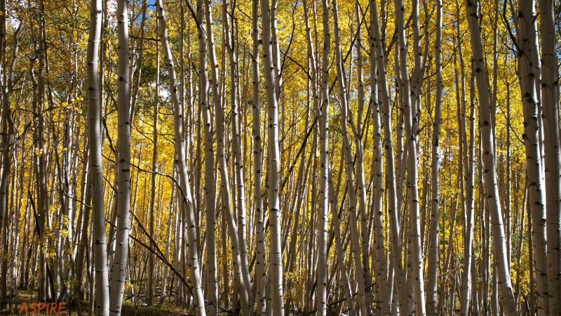 Crested Butte, Colorado // FITaspire.com